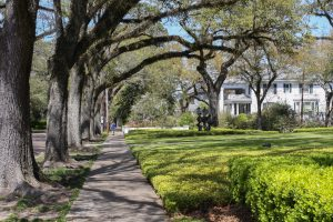 The Oak trees lining 5th Avenue make for the perfect stroll through the historic neighborhoods.